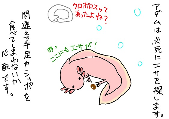 20090906uroborosu_fc2.jpg