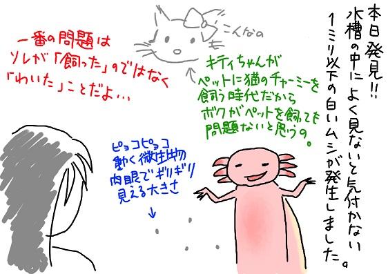 20090917mushi_fc2.jpg