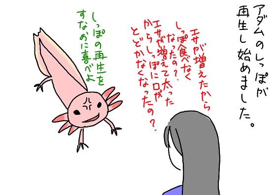 20091117saisei_fc2.jpg
