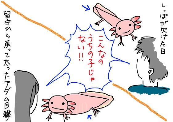 20091125uchinoko_fc2.jpg