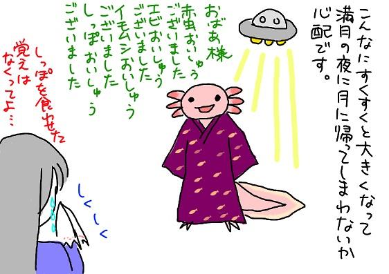 20091201kaguya_fc2.jpg