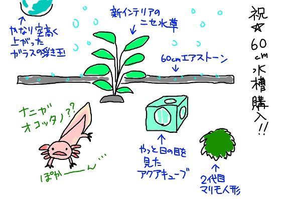 20091213sinsuisso_fc2.jpg