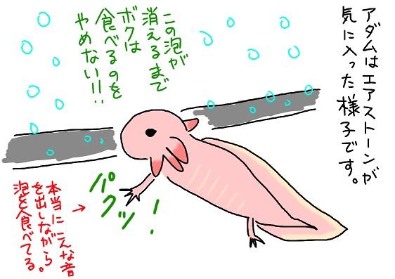 20091214awa_fc2.jpg