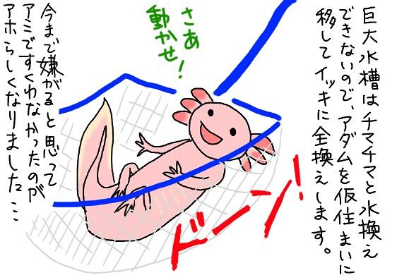 20091216ami_fc2.jpg