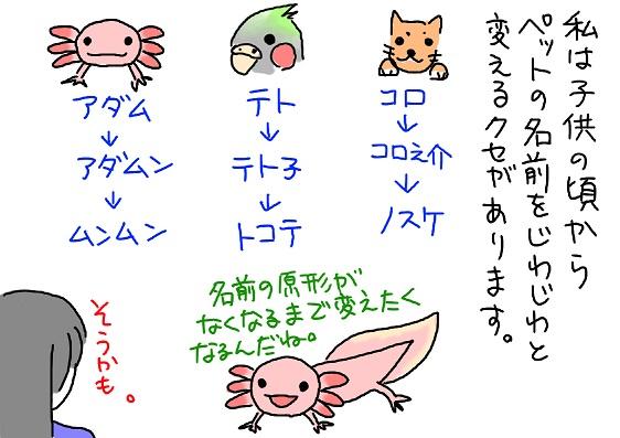 20100116adana_fc2.jpg