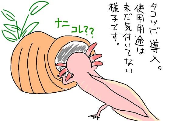 20100418takotubo_fc2.jpg