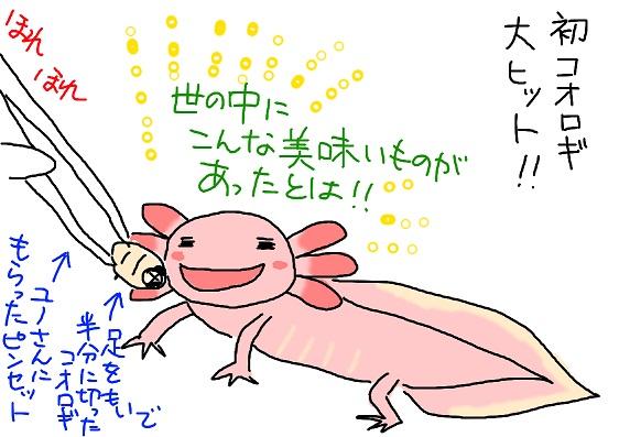 20100513korogi_fc2.jpg