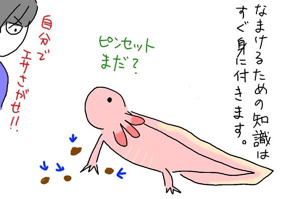 20100527taida_fc2.jpg