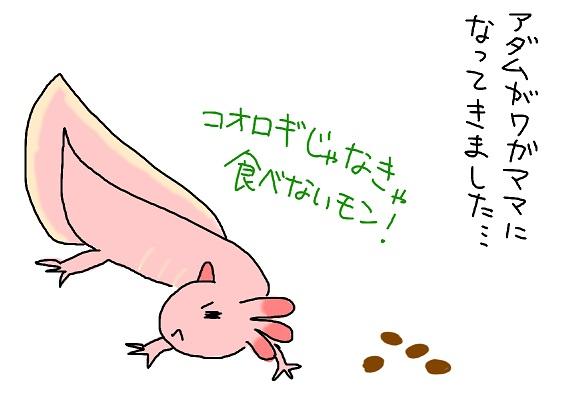 20100708wagamama_fc2.jpg