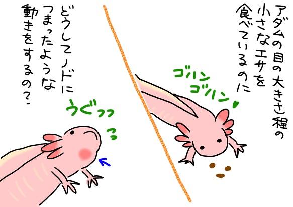 20101219piccoro_fc2.jpg