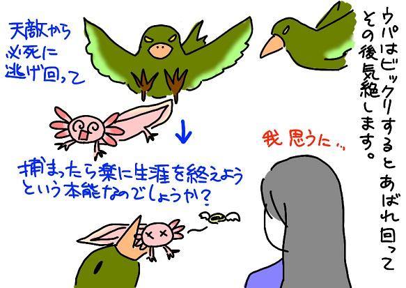 20110123pinch_fc2.jpg