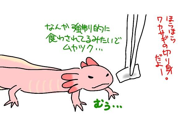 20110223wakasagi_fc2.jpg
