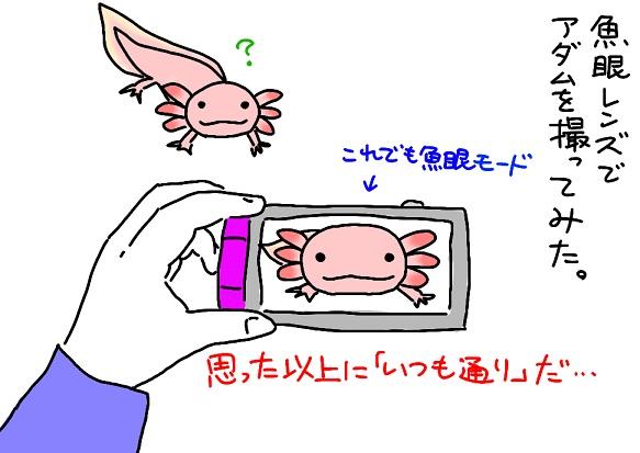 20110523gyogan_fc2.jpg