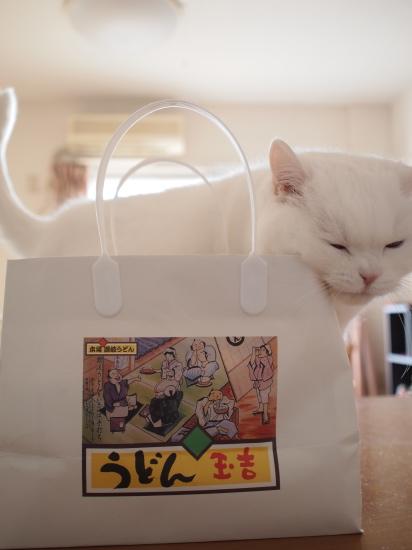 P1142789urabanashi.jpg