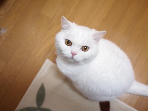 P1152890urabanashi.jpg