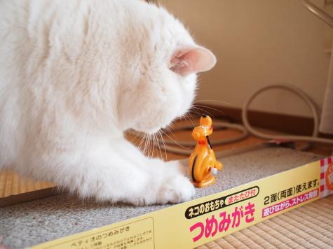 P1273592urabanashi.jpg