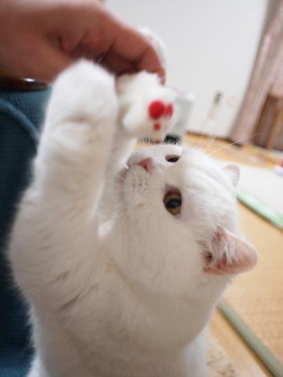 P2104287urabanashi.jpg
