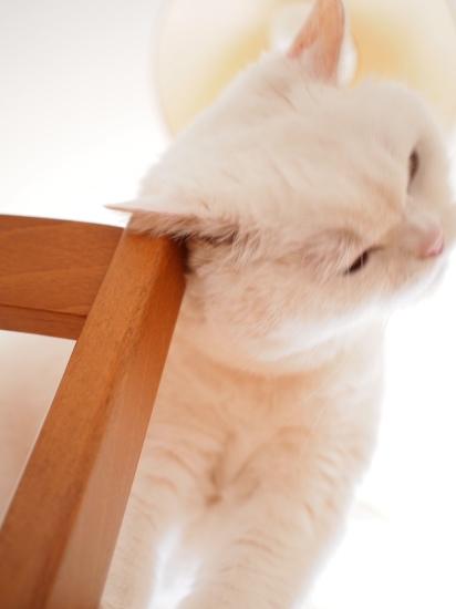 P2124448urabanashi.jpg