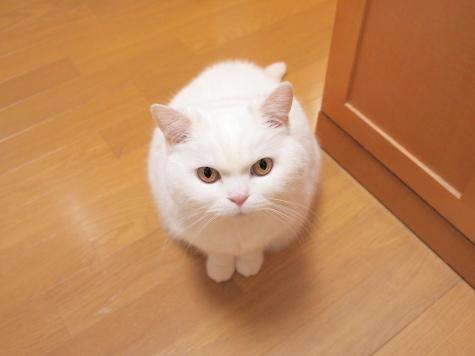 P2184883urabanashi.jpg