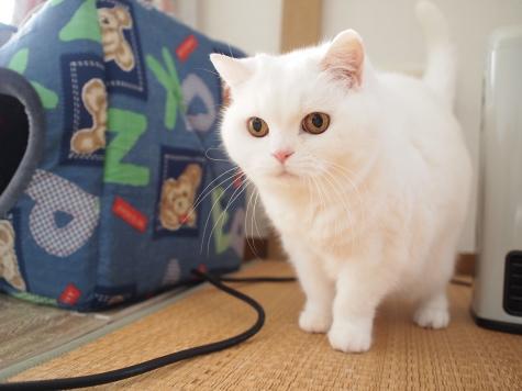 P2184947urabanashi.jpg