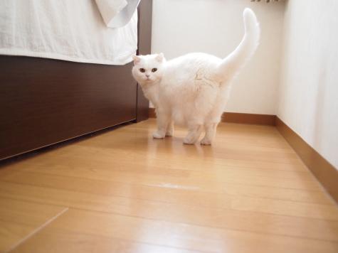 P2265321urabanashi.jpg
