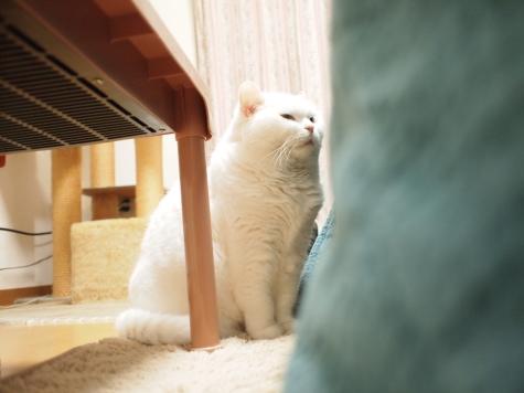 P3176423urabanashi.jpg