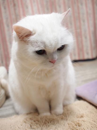 P3226710urabanashi.jpg