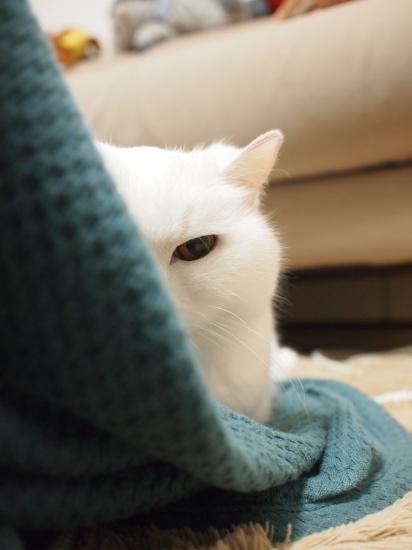 P3226738urabanashi.jpg