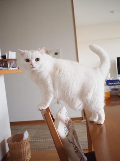 P3246815urabanashi.jpg