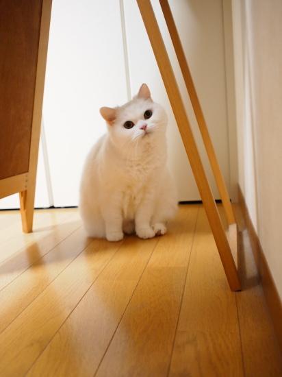 P3256874urabanashi.jpg