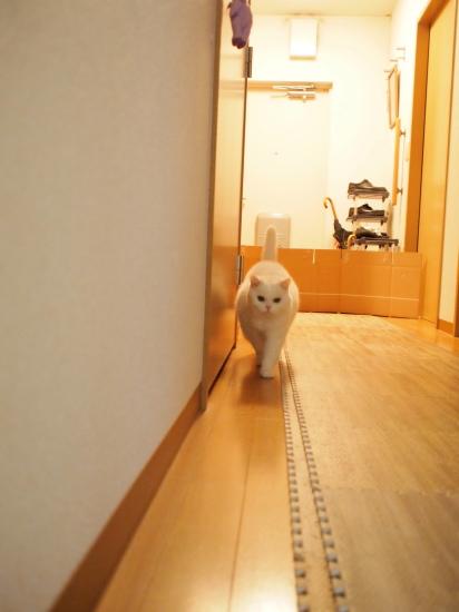 P3297111urabanashi.jpg