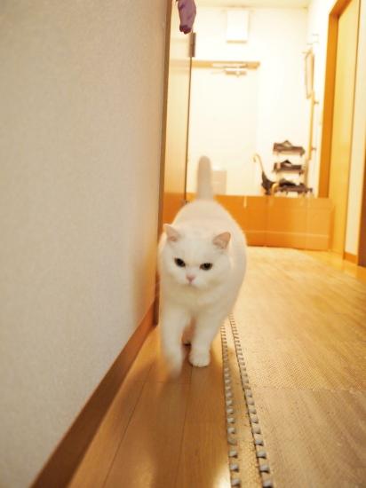 P3297112urabanashi.jpg