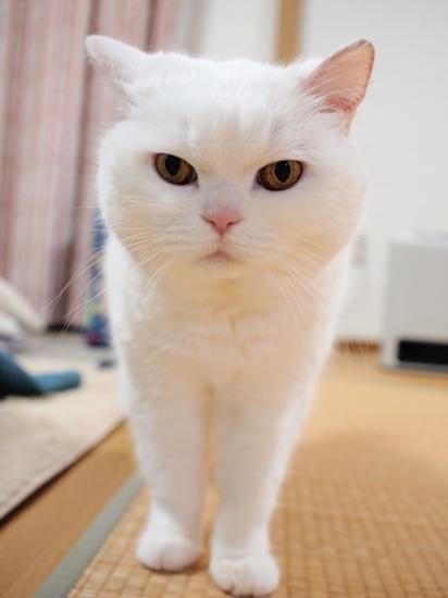 P4017261urabanashi.jpg