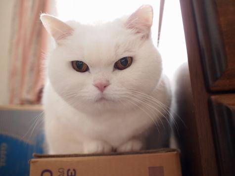 P4077543urabanashi.jpg