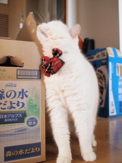 P4087566urabanashi.jpg