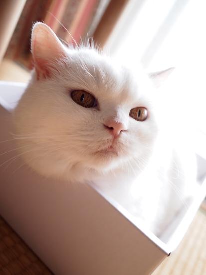 P7313361urabanashi.jpg