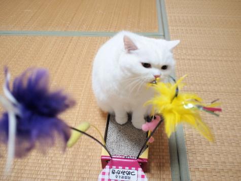 PB118829urabanashi.jpg