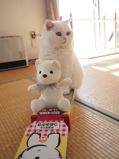 PB139046urabanashi.jpg