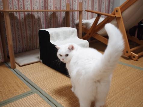 PB209413urabanashi.jpg
