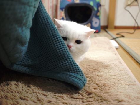 PB289818urabanashi.jpg