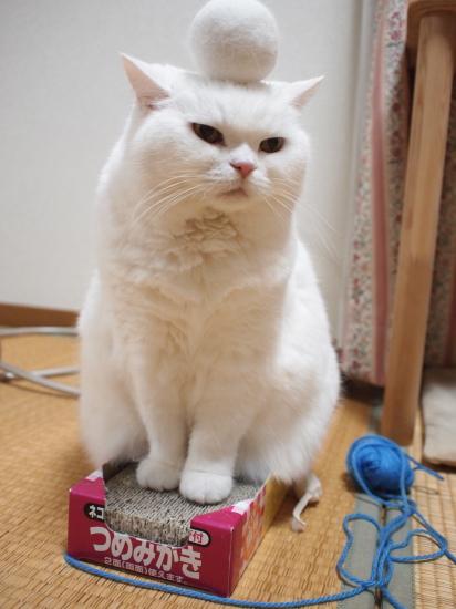 PB299863urabanashi.jpg