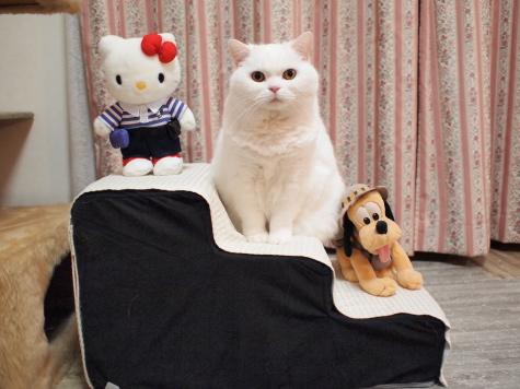 PC141009urabanashi.jpg