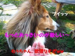 IMG_1695-1.jpg