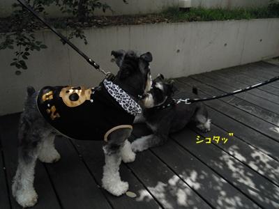 神戸1 002