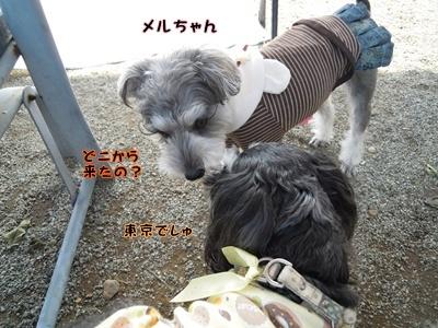 神戸3 011