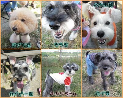 神戸3cats1