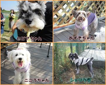 神戸3cats2