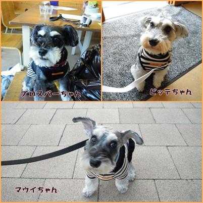 神戸4cats