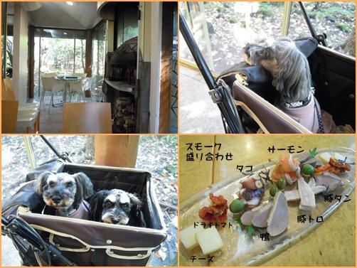 軽井沢2cats4