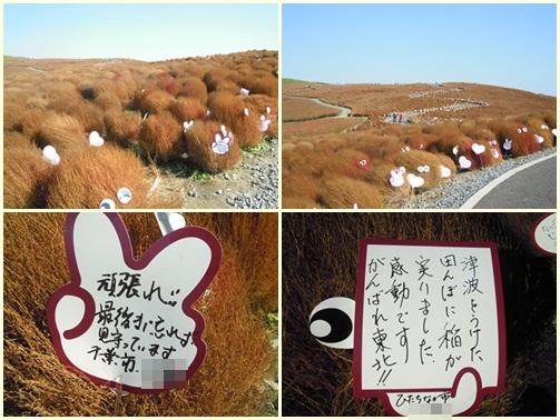 20111104cats1.jpg